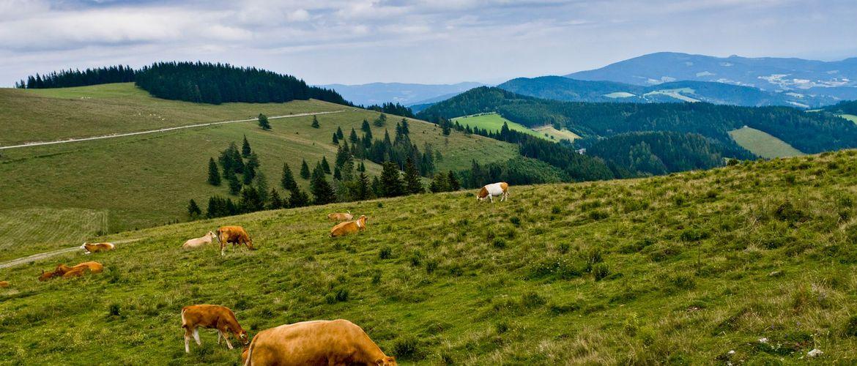 Teichalm Mariazeller Weg 2348 mariazellerweg Steiermark Tourismus Leo Himsl web
